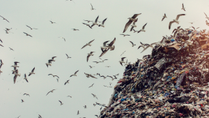 General waste piled up at landfill
