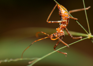 Assassin Bugs Recycle
