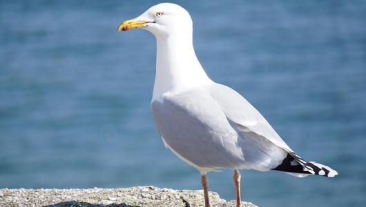 Birds recycle